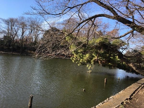h29,2春めくボート池2