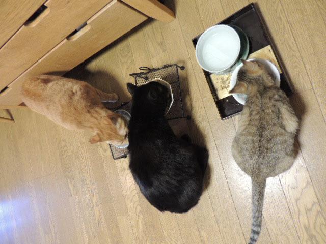 お食事DSCN0164