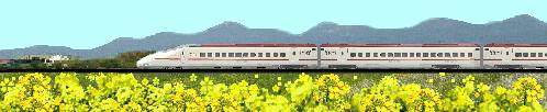 800系新幹線と菜の花