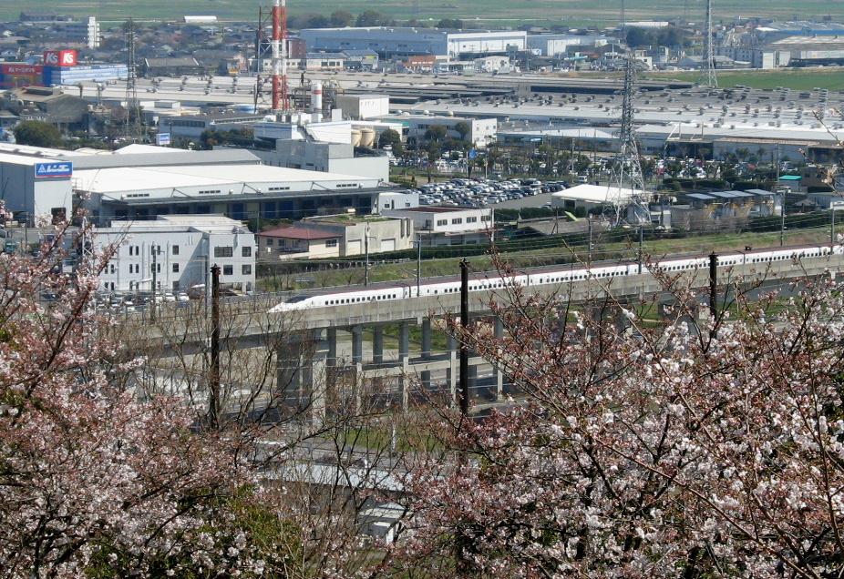 800系新幹線と桜 朝日山公園