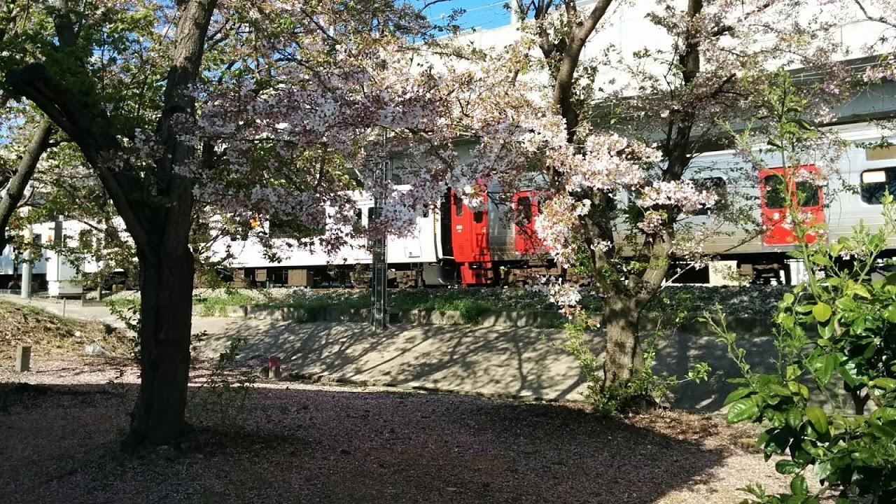 817系813系桜