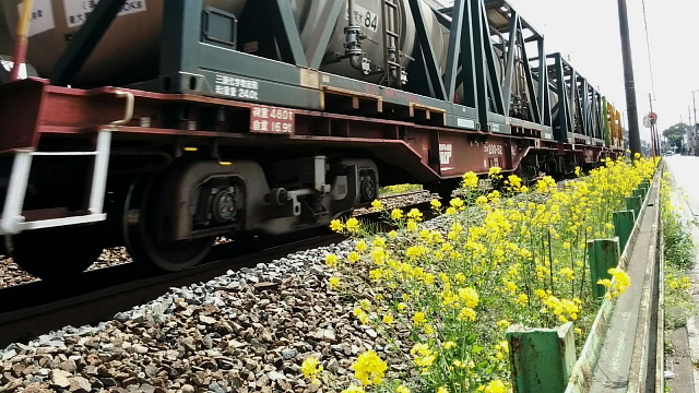 ED76 菜の花