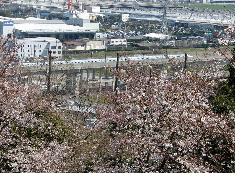 新幹線と桜 朝日山公園より