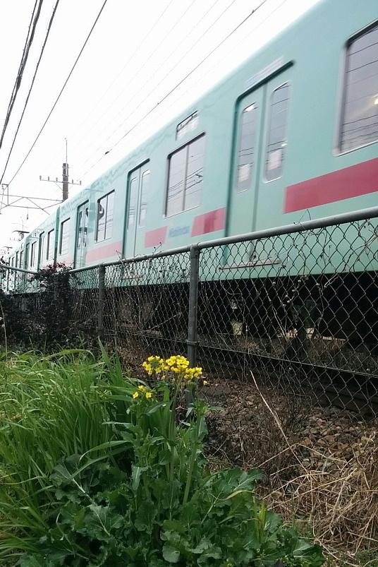 菜の花 西鉄電車