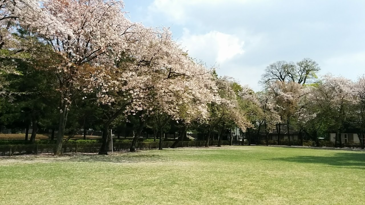 水前寺公園の桜