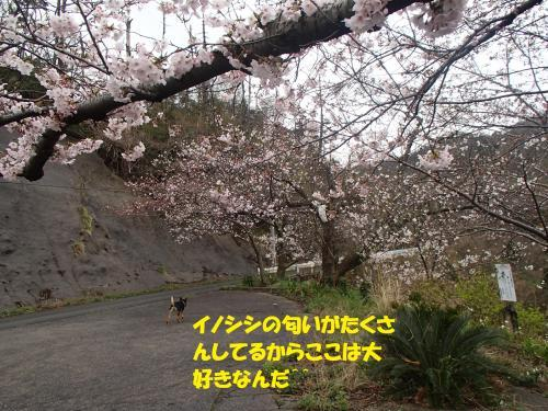 P4060921_convert_20170407083732.jpg
