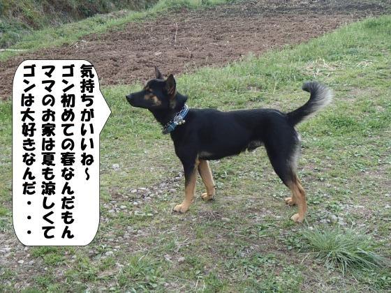 P4100977_convert_20170413111203.jpg