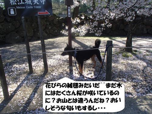 P4131005_convert_20170414092823.jpg
