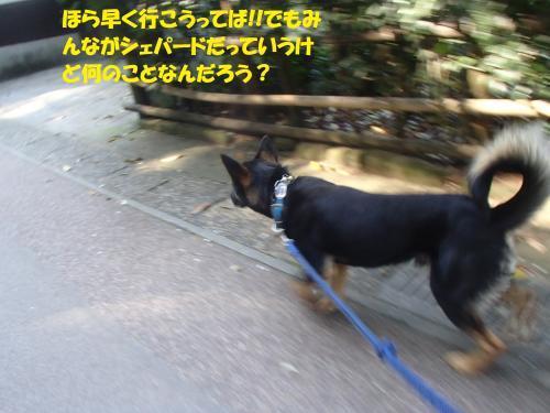 P4131009_convert_20170414092948.jpg