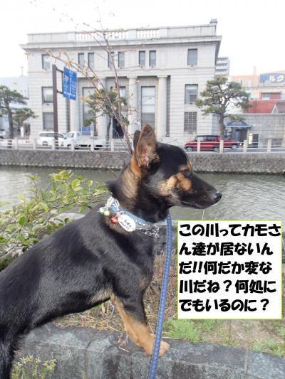 P4141029_convert_20170416111005.jpg