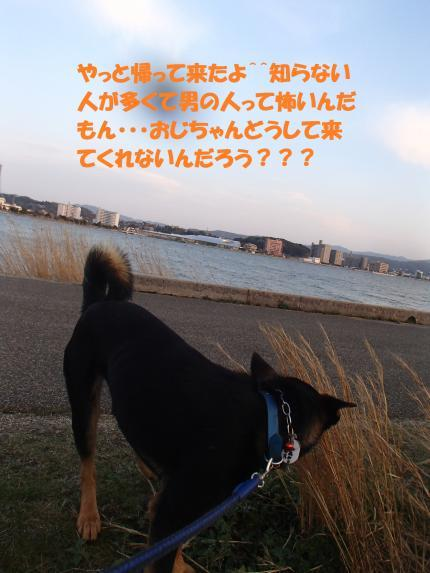 P4141031_convert_20170416111026.jpg