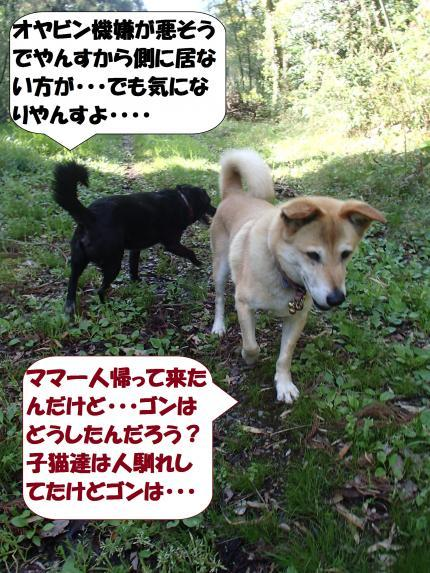 P4180035_convert_20170422135200.jpg