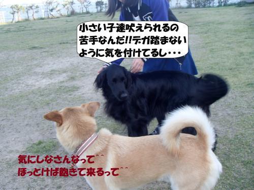 P4220087_convert_20170423103805.jpg
