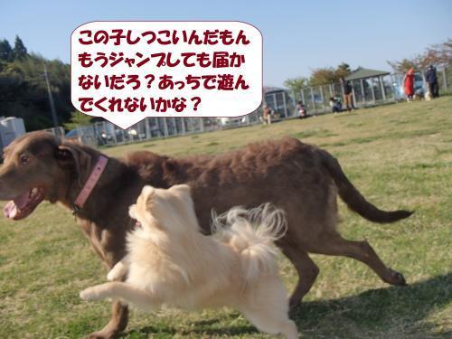 P4230100_convert_20170424102637.jpg