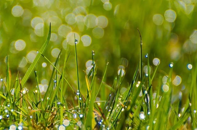 grass-164352_640.jpg