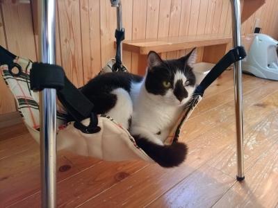 椅子に取り付けるハンモック使用例