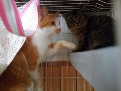 茶シロー君と椿ちゃん