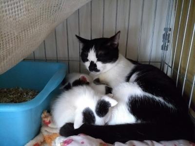 マミちゃんと子猫達