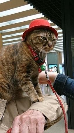 DSC_0815赤帽ネコ