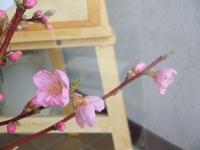 桃の花が開いた2