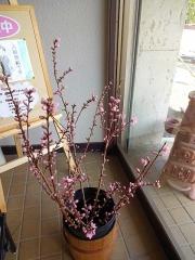 桃の花が増えた