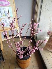 4月5日 桃の枝