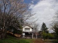 4月9日 蔵座敷とロケセットの間の桜