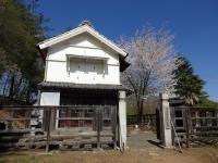 蔵座敷の桜 4月19日 2