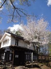 蔵座敷の桜 4月19日