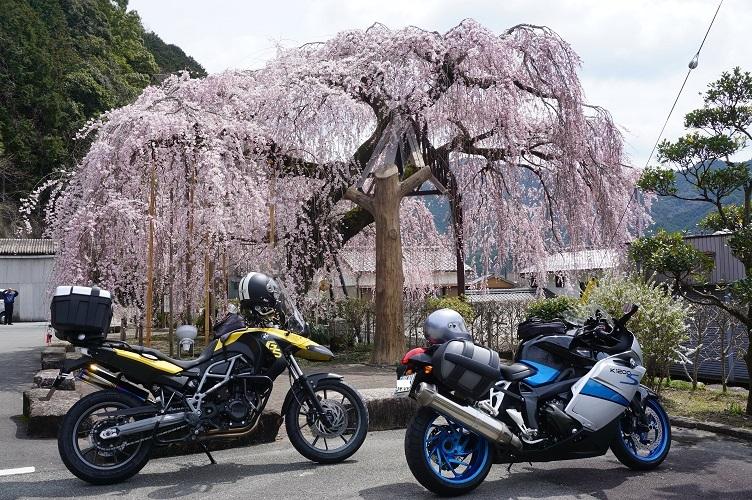 枝垂れバイク