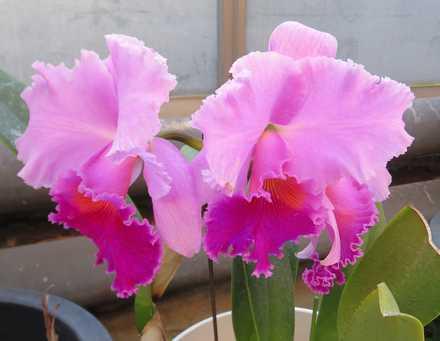 花の湯 蘭 2