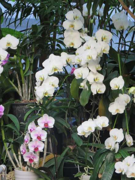 花の湯 蘭 3