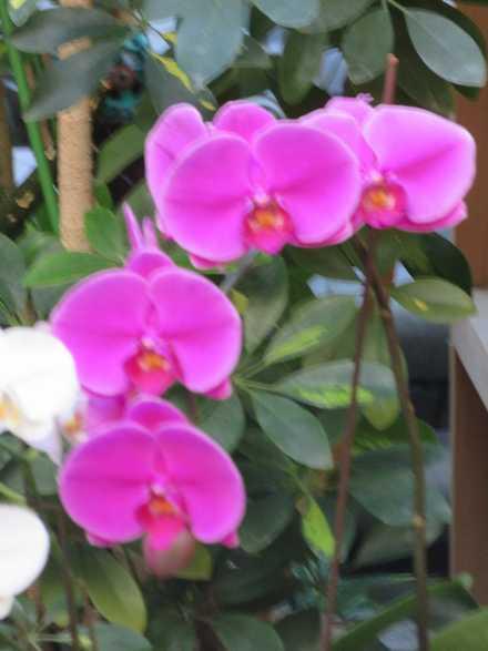 花の湯 蘭 4
