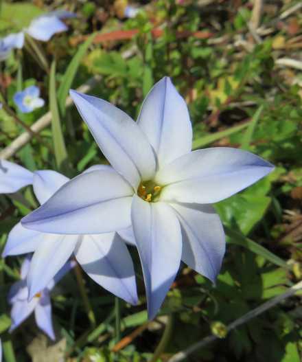青い花 2