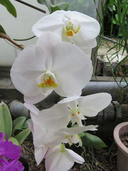 花の湯 3