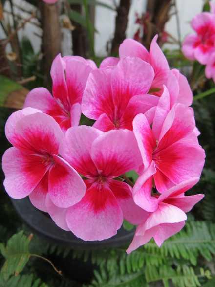 花の湯 5