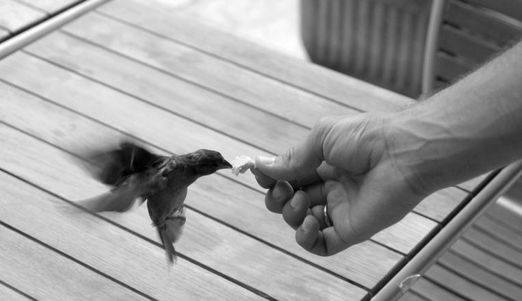 餌付け 鳥 ペット