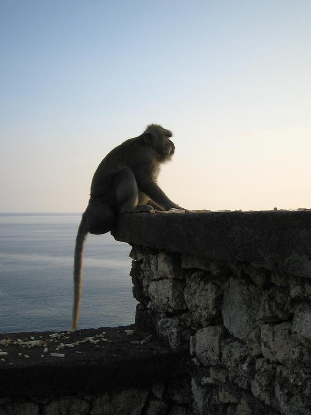 崖 猿 危険