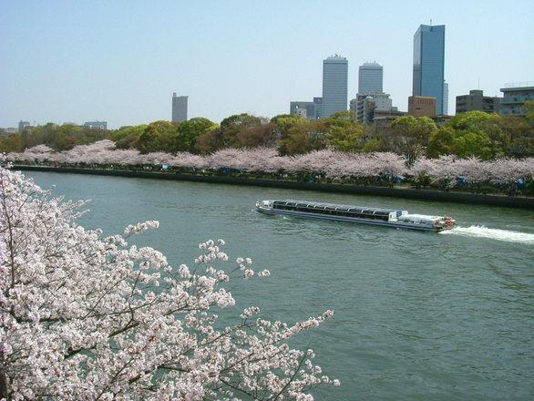 河川 桜 風景