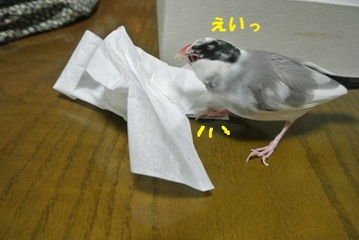 DSC_6959済