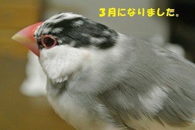 DSC_7011済
