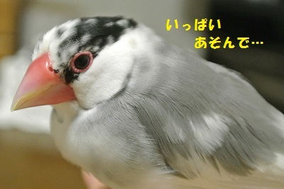 DSC_7015済