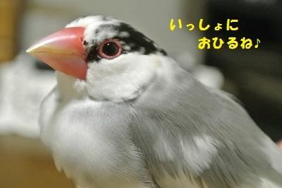DSC_7016済