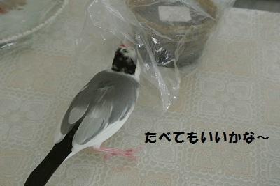 DSC_7037済