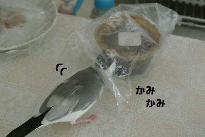 DSC_7040済