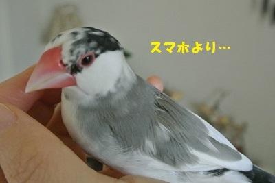 DSC_7076済