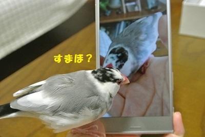 DSC_7087済