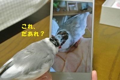 DSC_7088済