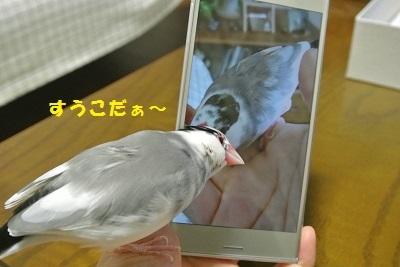 DSC_7089済
