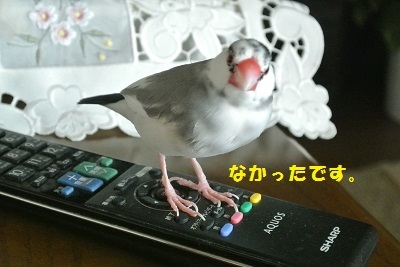 DSC_7117済